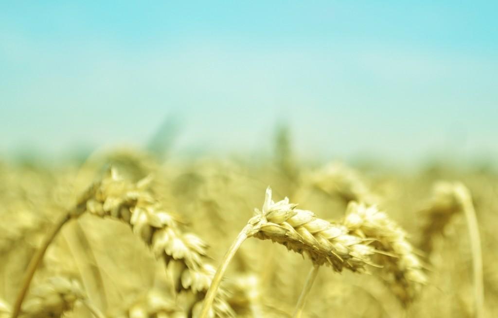 Spór o ziarna: czym są produkty pełnoziarniste dla naszego organizmu?